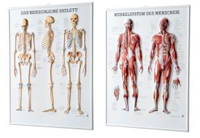 Anatomische 3D Relieftafeln