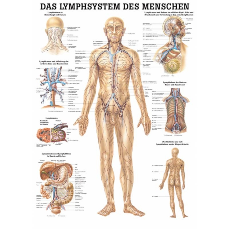 "Miniposter ""Lymphsystem des Menschen"""