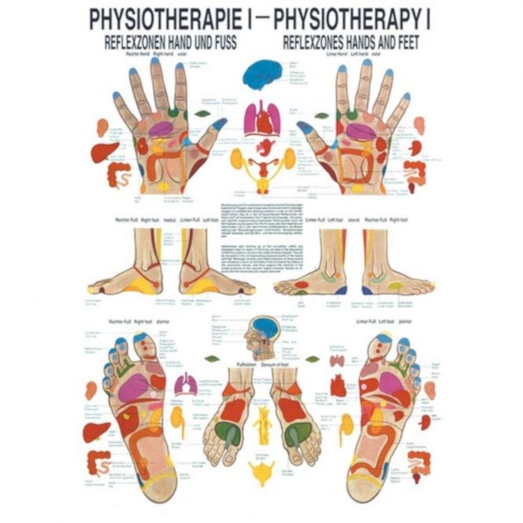 "Poster ""Physiotherapie I, Reflexzonen Hand & Fuß"""