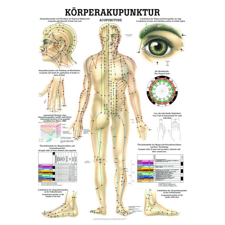 """Öffne Poster """"Körperakupunktur"""""""