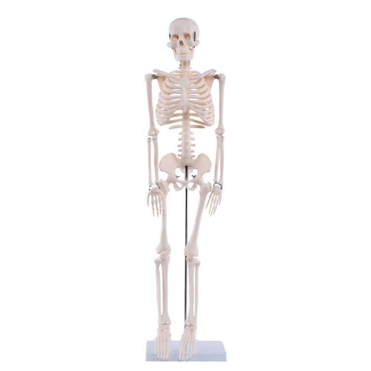 Öffne Medi-Skelett