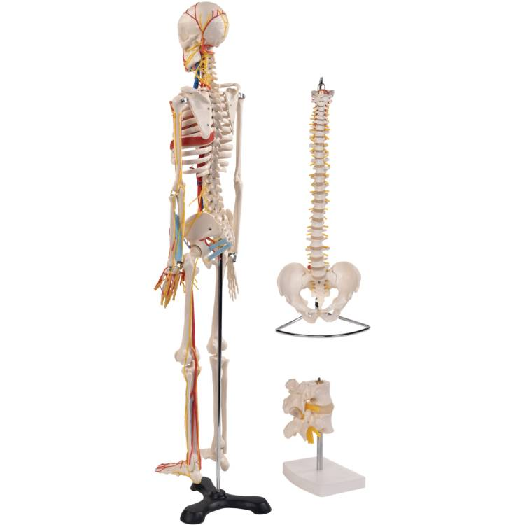 Öffne Anatomie Set 3
